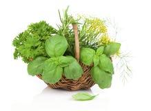 Cesta de vime com ervas frescas Foto de Stock