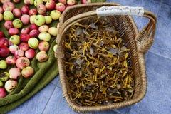Cesta de vime com os tubaeformis e as maçãs do craterellus dos cogumelos Imagem de Stock