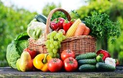 Cesta de vime com os vegetais orgânicos crus sortidos no jardim