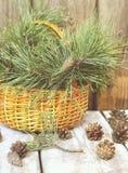 Cesta de vime com ramos e os cones coníferos Imagens de Stock