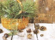 Cesta de vime com ramos e os cones coníferos Fotos de Stock Royalty Free