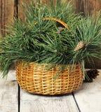 Cesta de vime com ramos e os cones coníferos Fotografia de Stock Royalty Free