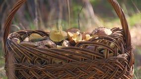 Cesta de vime completamente de vários tipos dos cogumelos em uma floresta filme