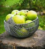 Cesta de vime de peras maduras fora Fotos de Stock