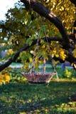 A cesta de vime pendura no ramo de árvore Folha na terra ao redor foto de stock