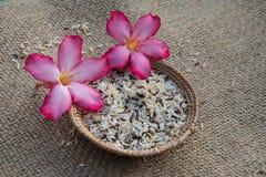 Cesta del arroz Imagen de archivo libre de regalías