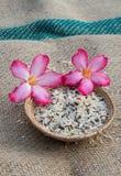Cesta del arroz Foto de archivo libre de regalías