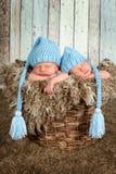 Cesta del bebé con los gemelos Imagen de archivo libre de regalías