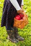 Cesta del control de la niña de abedul con las manzanas maduras al aire libre Foto de archivo libre de regalías