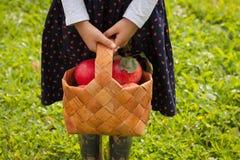 Cesta del control de la niña de abedul con las manzanas maduras al aire libre Imágenes de archivo libres de regalías