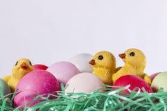 Cesta del huevo de Pascua, polluelos Imágenes de archivo libres de regalías
