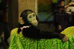 Cesta del mono Fotos de archivo