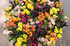 Cesta del tulipán en jardín de la ciudad diversos colores Fotografía de archivo