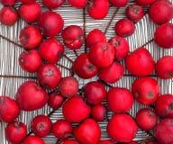 Cesta do metal com variedade saudável suculenta regional fresca saboroso vermelha Gloster 69 da maçã das maçãs no fim branco do f fotos de stock royalty free