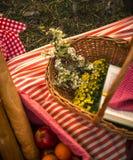 Cesta do piquenique da mola Foto de Stock Royalty Free