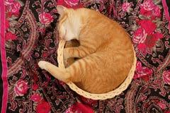 Cesta do sono do gato fotografia de stock royalty free