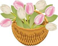 Cesta do Tulip Fotografia de Stock Royalty Free