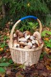 Cesta dos cogumelos Fotos de Stock Royalty Free