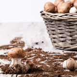 Cesta dos cogumelos Fotografia de Stock