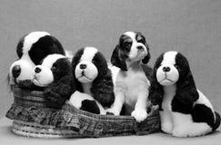 Cesta dos filhotes de cachorro fotografia de stock royalty free