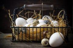 Cesta dos ovos recentemente colocados que encontram-se na palha no Fotos de Stock