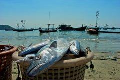 Cesta dos peixes Fotografia de Stock