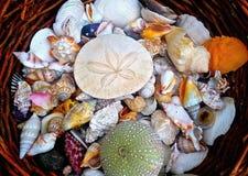 Cesta dos shell no jardim fotos de stock