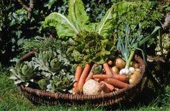 Cesta dos vegetais imagem de stock