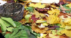 Cesta e folha do outono Fotos de Stock Royalty Free