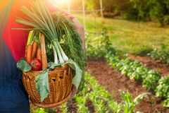 Cesta enchida com os legumes frescos Imagem de Stock Royalty Free