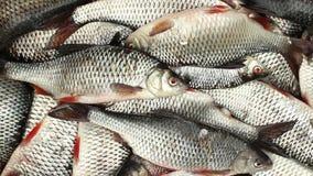 Cesta llena de los pescados vivos almacen de metraje de vídeo