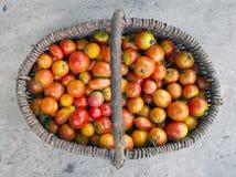 Cesta llena de tomates recolectados Fotografía de archivo libre de regalías