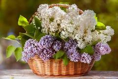 Cesta muito bonita dos lilás brancos e roxos imagem de stock royalty free