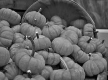 Cesta por completo de calabazas blancos y negros Foto de archivo libre de regalías