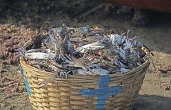 Cesta por completo de cangrejos azules Imagen de archivo libre de regalías