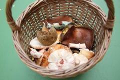 Cesta por completo de diversas setas comestibles salvajes frescas en una hierba Fotografía de archivo