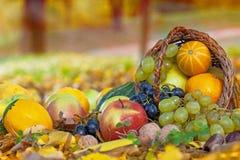 Cesta por completo de fruta fresca del otoño Imagenes de archivo