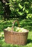 Cesta por completo de manzanas Imagen de archivo