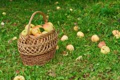 Cesta por completo de manzanas fotos de archivo