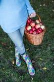 Cesta que lleva de la mujer por completo de manzanas Foto de archivo