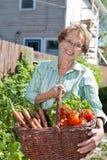 Cesta sênior da terra arrendada da mulher completamente dos vegetais Fotografia de Stock Royalty Free