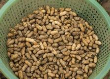 Cesta verde llenada de los cacahuetes recién cosechados. Fotos de archivo libres de regalías