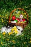 Cesta y conejito de Pascua en la hierba Imagenes de archivo
