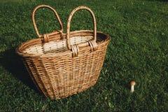 Cesta y seta vacías grandes en la hierba Fotografía de archivo libre de regalías