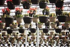 Cestas colgantes de la flor Fotos de archivo