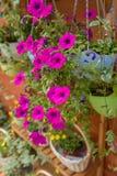 Cestas de la flor de las rosas que cuelgan en la pared Foto de archivo libre de regalías