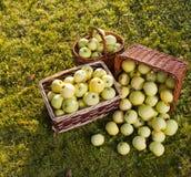 Cestas de maçãs verdes maduras Fotos de Stock Royalty Free