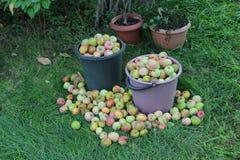 Cestas de manzanas Fotos de archivo