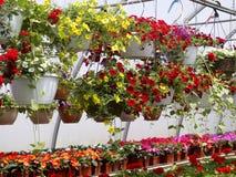 Cestas de suspensão da flor Imagens de Stock Royalty Free