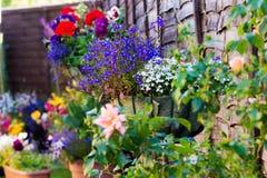 Cestas de suspensão da flor imagens de stock